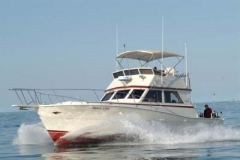 Salmon and Trout fishing aboard the biggest Charter boats in the Port of Kenosha. Nicole Lynn 1 of 3 40ft plus Viking Yachts we have in our fleet. The boats built with sport fishing in mind!